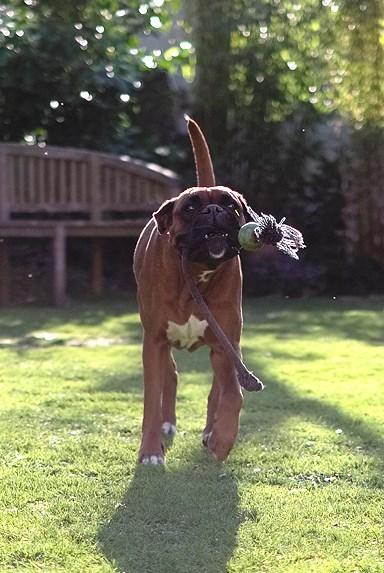 der Lieblingsball :)