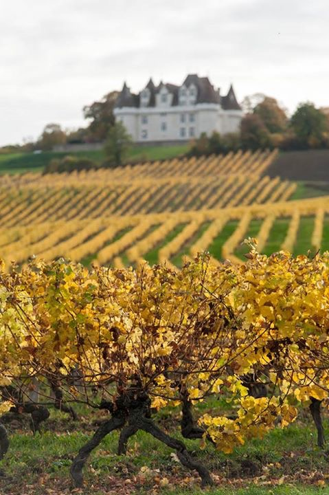 Monbazillac vineyards