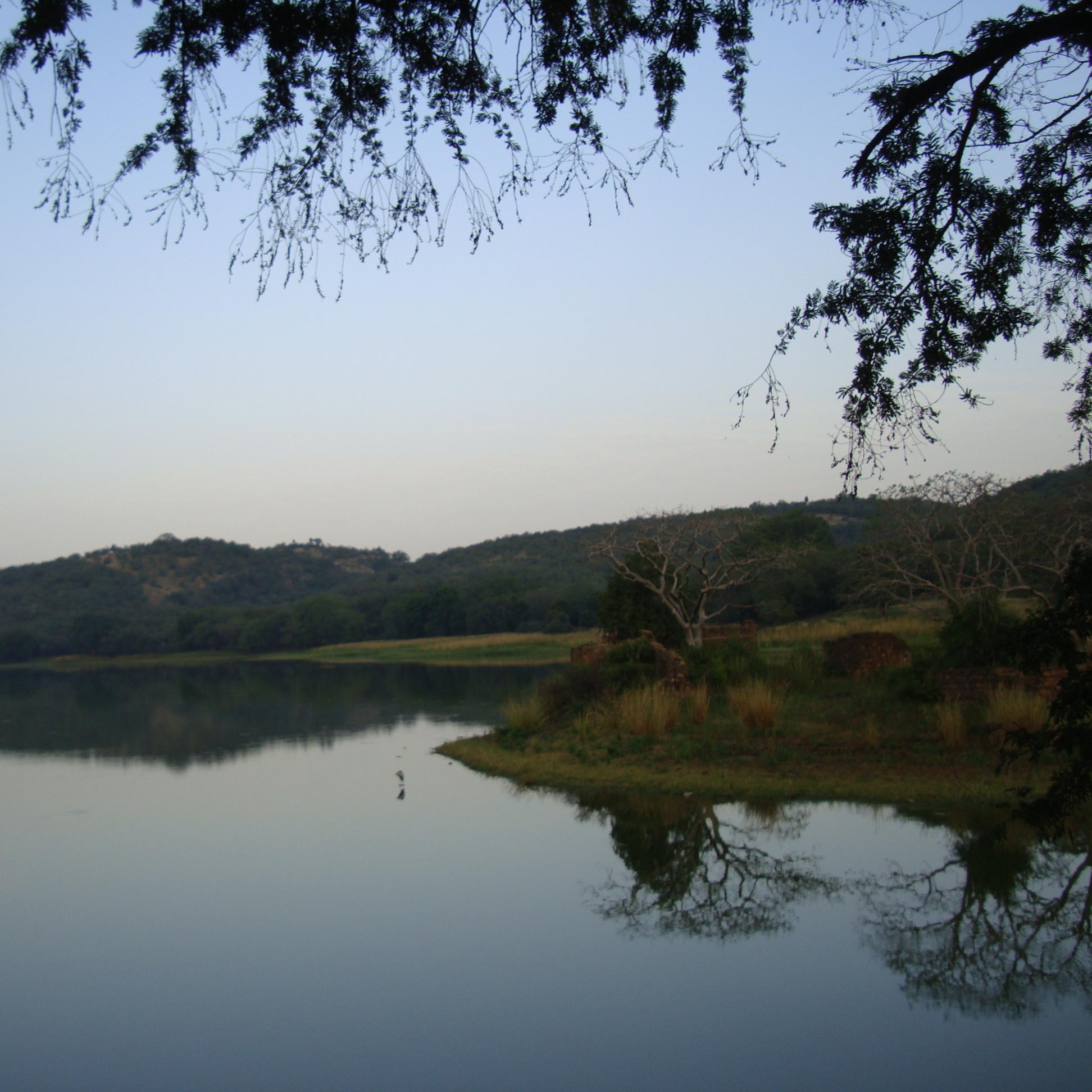 Rhantambore National Park Rajasthan