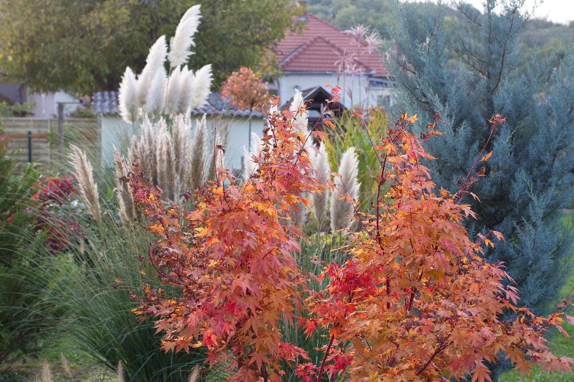 Ende Oktober - Garten Ungarn