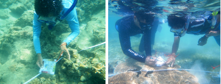 "IOI INDONESIA: Checking the condition of coral by using ""Coral Health Chart"". The method based on the actual colours of bleached and healthy corals"