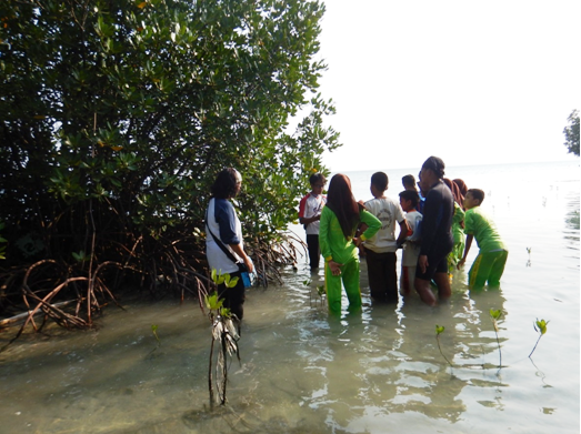 IOI INDONESIA: A trainer explaining mangrove morphology and how to identify the species in Tidung Island (one of the islands in Seribu Islands)