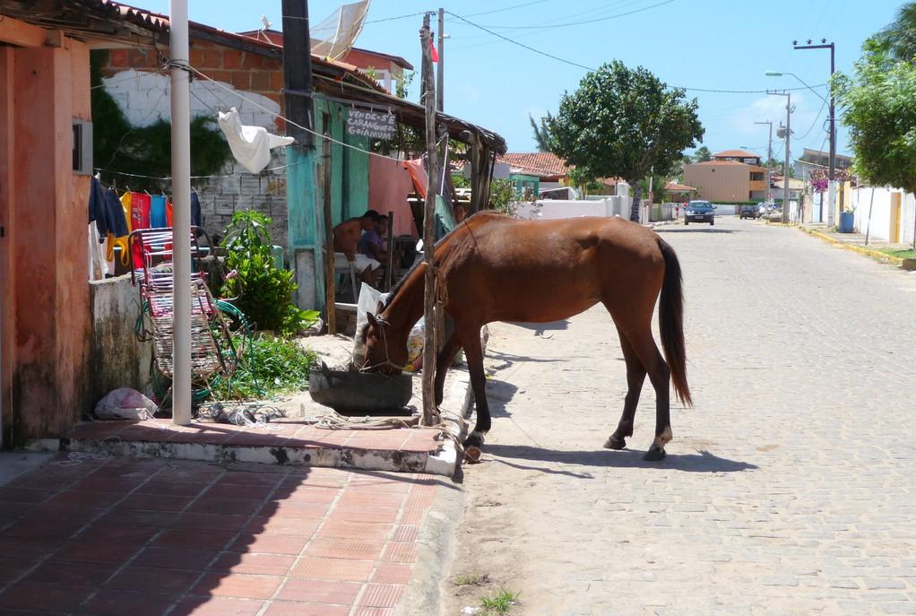 Cavallo randagio