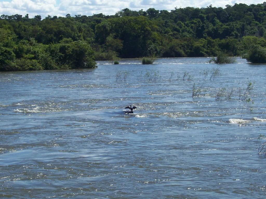 Rio Iguassú, uccello esibizionista