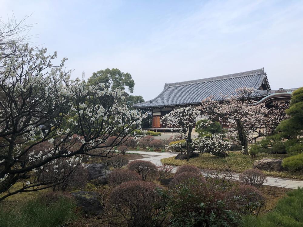 近くのお寺さんのお庭。あまりに綺麗だったので、ついカメラに収めてしまいました。