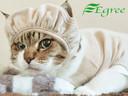 猫の帽子。頭部の手術後や傷の保護などに