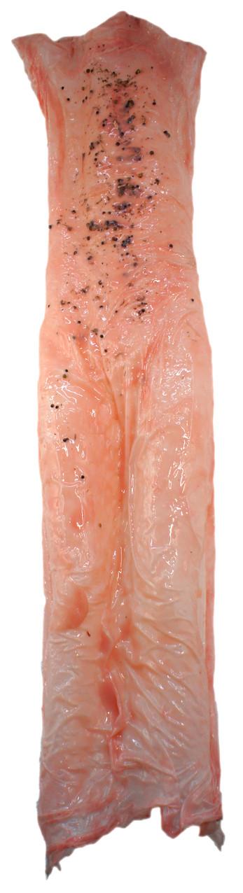 Befruchtete Häutungshaut 2. Silikon, Seide, Samen, Pigmente, ca. 1,40 m