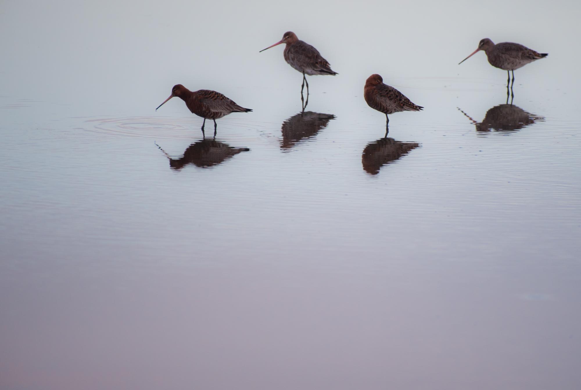 """Lauréate jeune """"oiseaux sauvage de pleine nature"""" à Montier-en-Der 2016"""