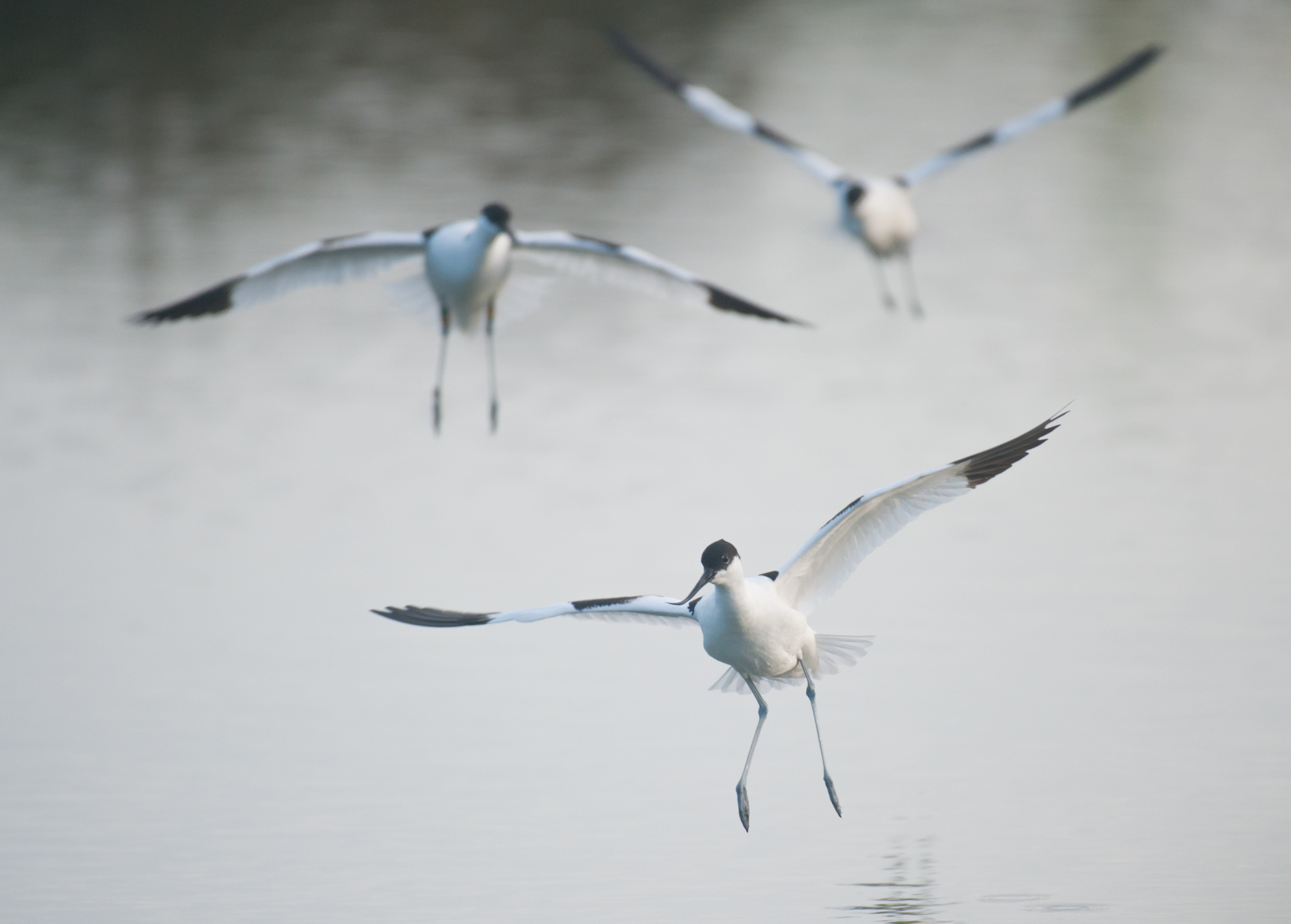 """Prix jeune """"oiseaux sauvage de pleine nature"""" à Montier-en-Der 2016"""
