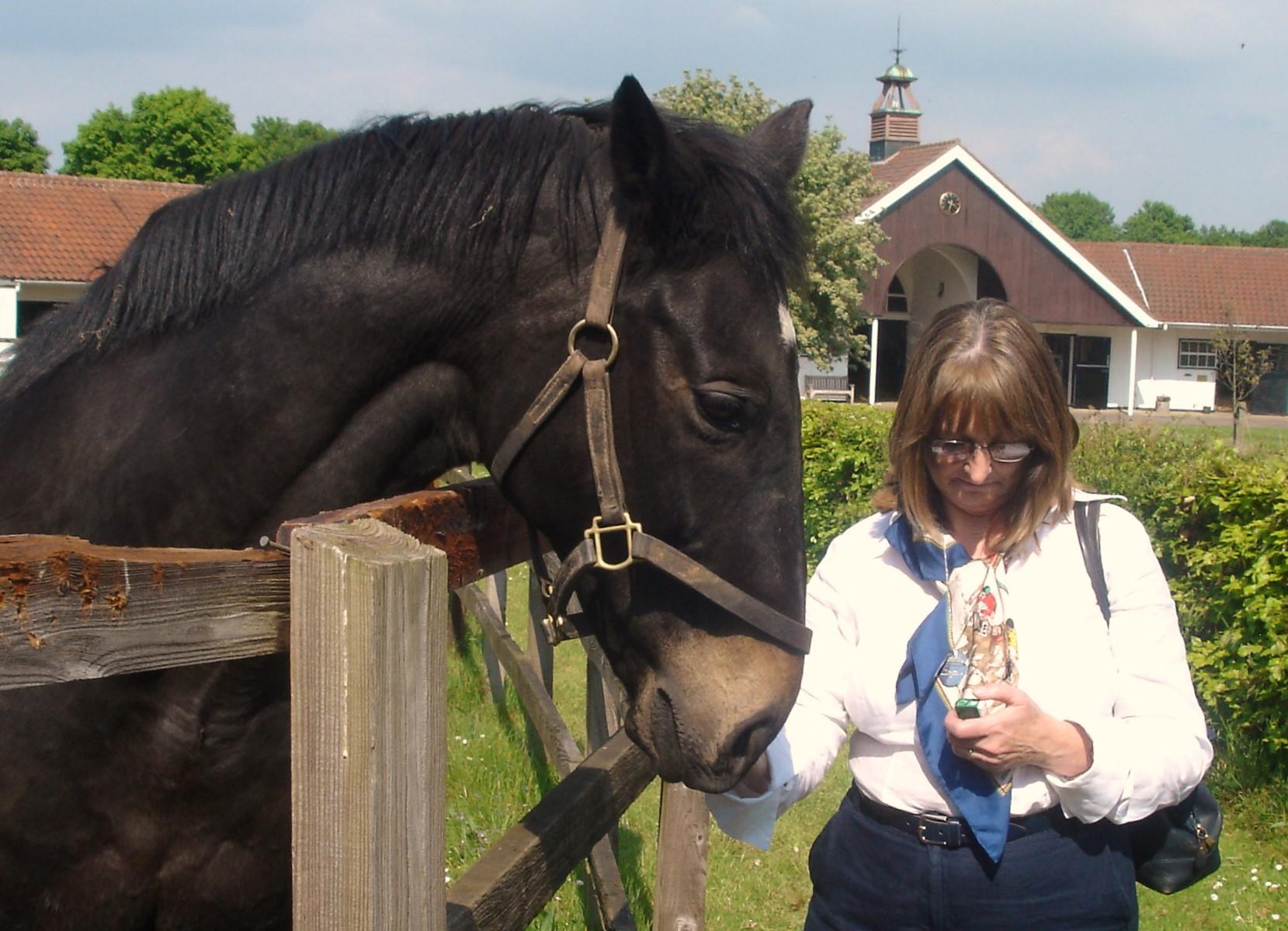 Die Pferde werden mit Tic-Tac-Mints verwöhnt