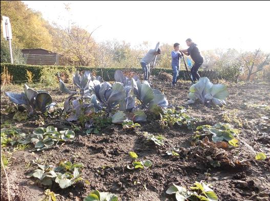 Unser Schulgarten - Bei der Arbeit ...
