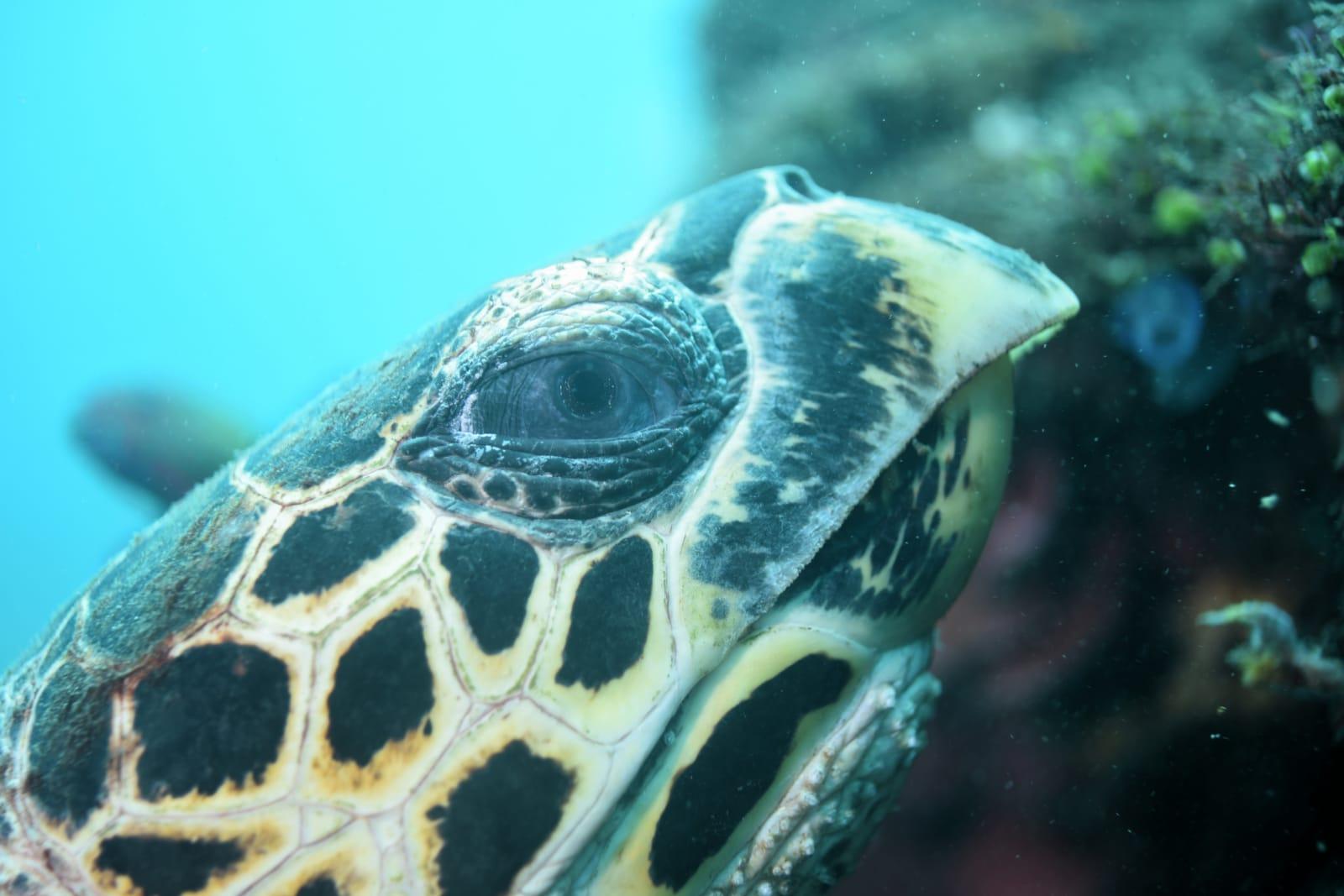 Entspannen wie die Schildkröten |Foto: Ulla Haug