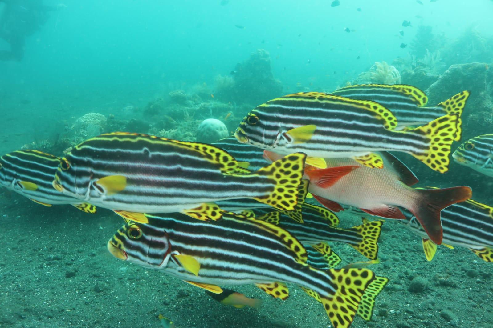 viele bunte Fische |Foto: Ulla Haug
