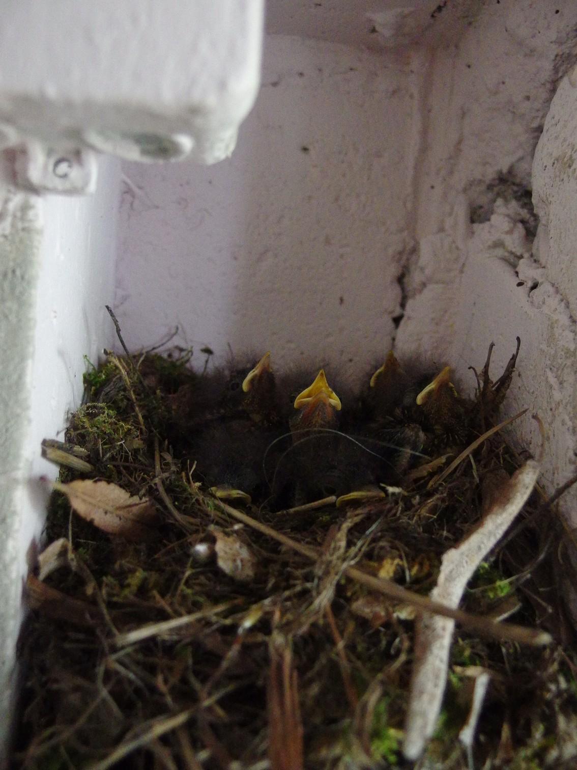 Ateliervögel 2