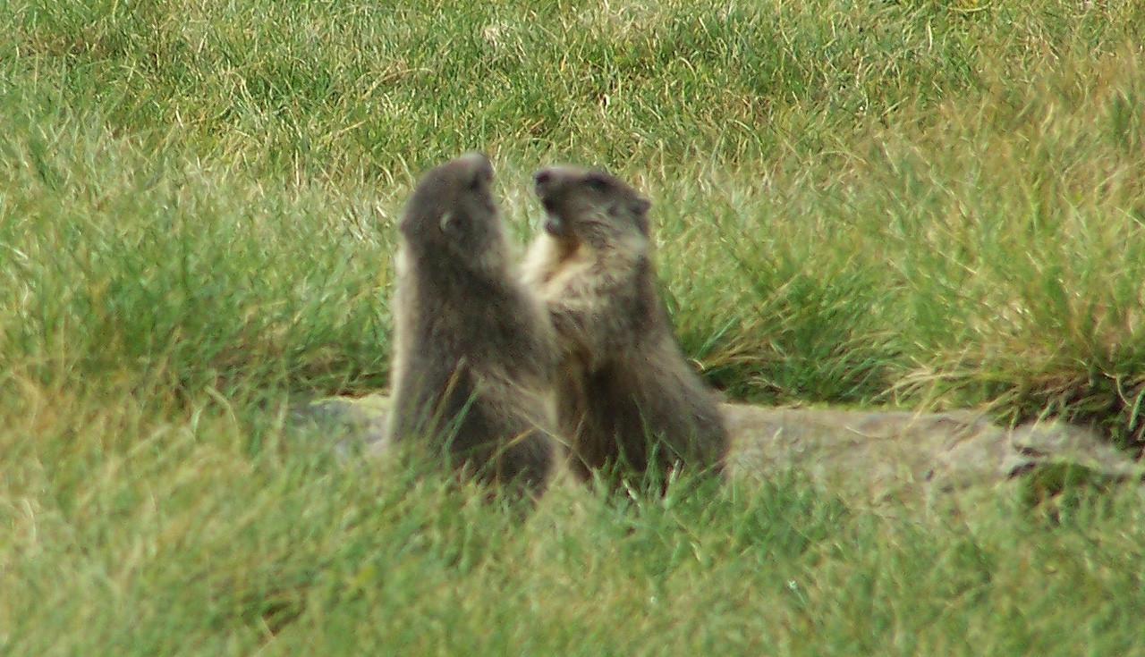Marmottes et Cie