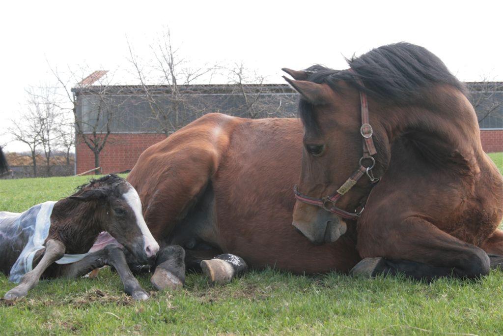 Susi und Kleine Liebe kurz nach der Geburt
