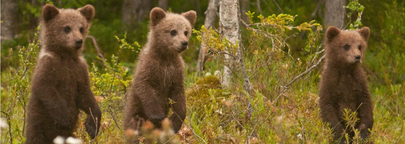 Wild-Taiga-tourism-finland