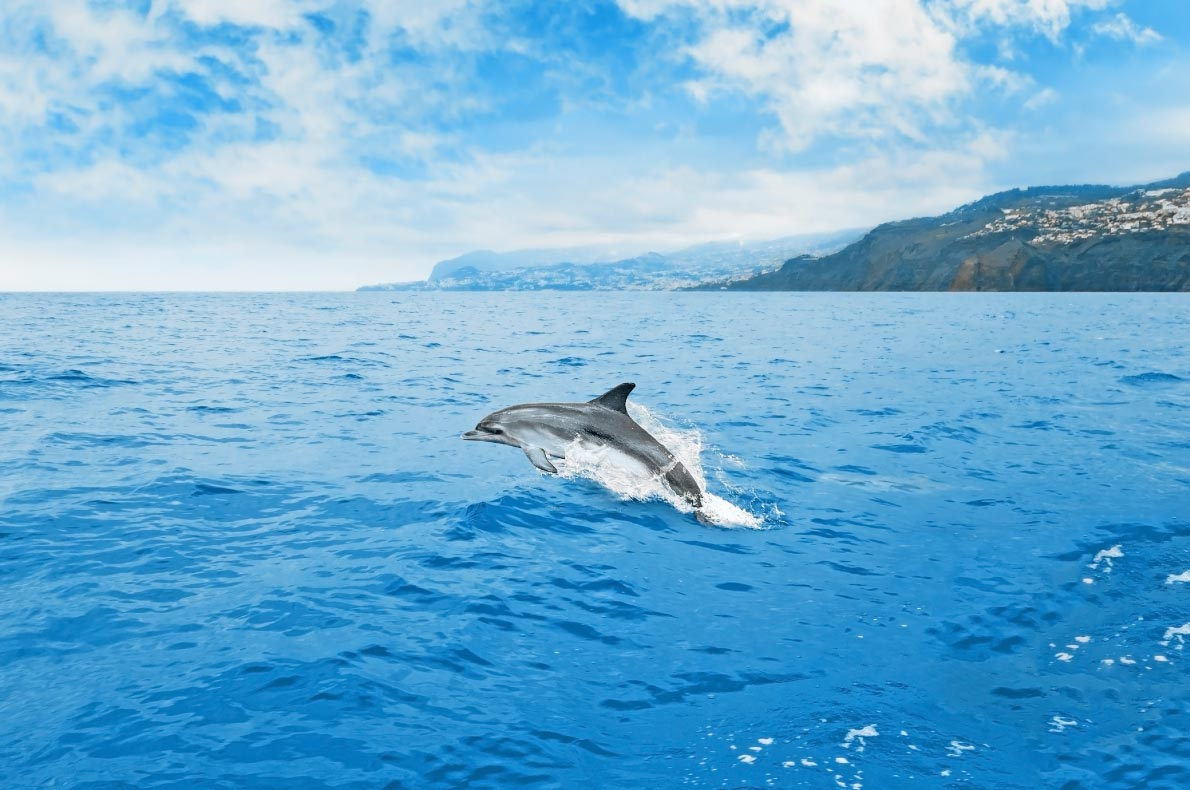 Madeira with Kids - Dolphin watching - copyright  aldorado
