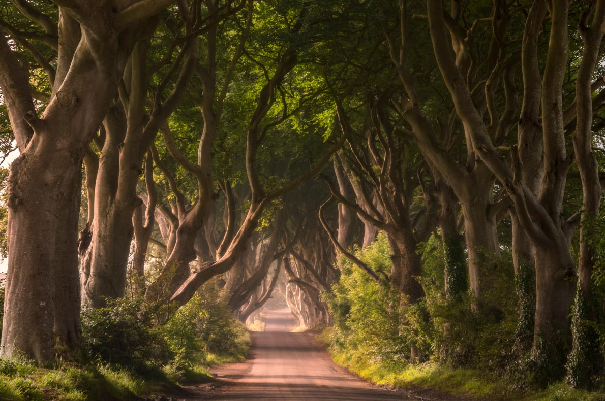 Best places to visit in Ireland - Dark Hedges - copyright Anna-Efremova - European Best Destinations
