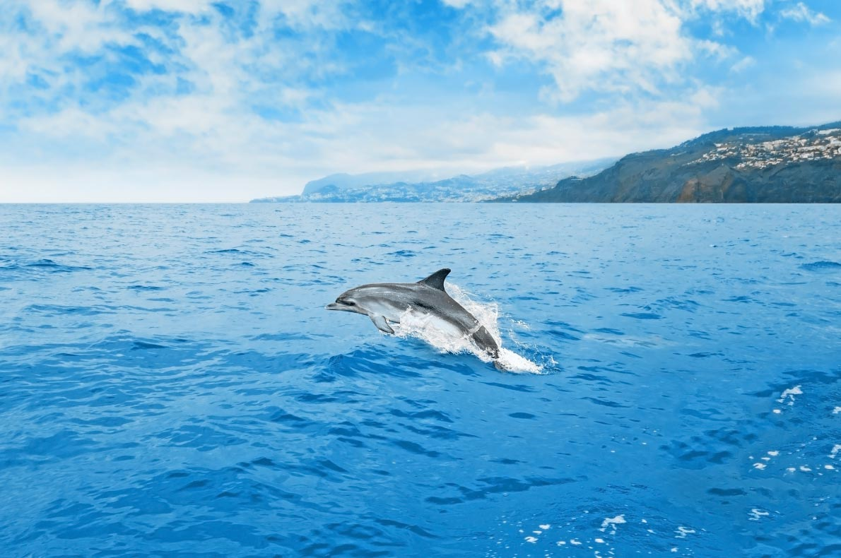 Best-things-to-do-in-Europe---Dolphin-watching-tour-in-Madeira---Copyright-aldorado