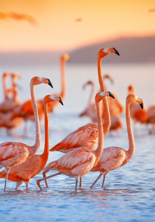 best-bird-watching-destinations