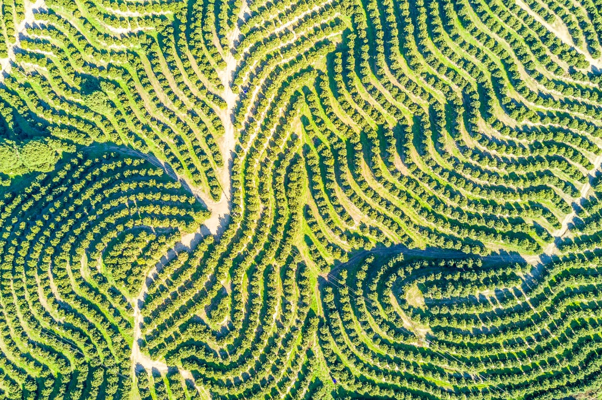 Nature wonders in Portugal - Orange tree plantation in the Algarve - Copyright  Sopotnicki - European Best Destinations