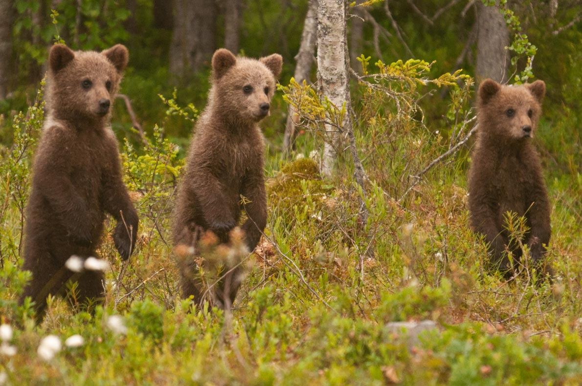 Best sustainable destinations for families - Wild Taiga  - Copyright Wild Taiga -  European Best Destinations