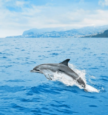dolphin-and-whale-watching-madeira