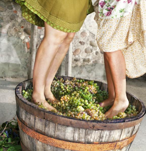 Istria-best-culinary-destination-Croatia
