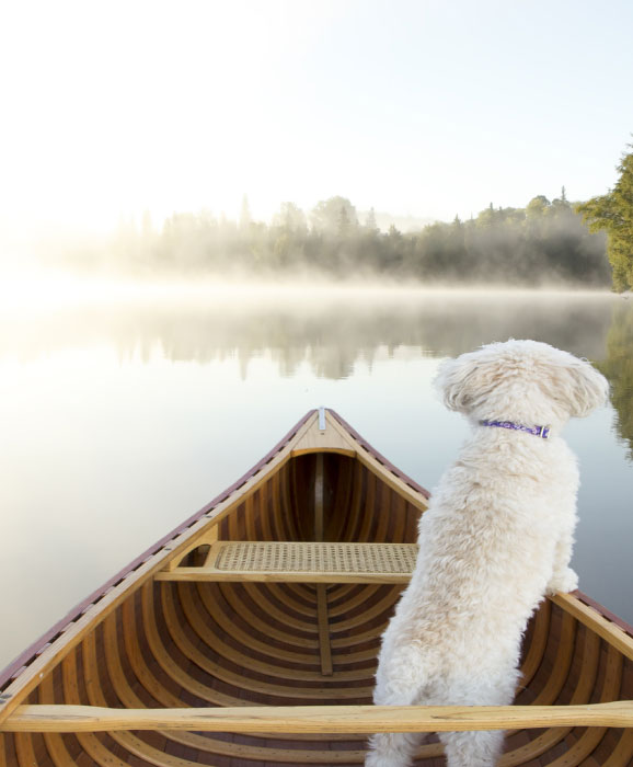 best-dog-friendly-destinations