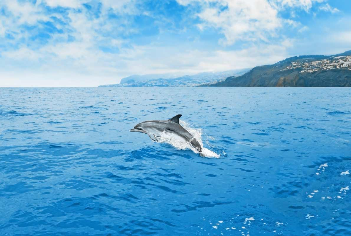 dolphin-whatching-best-things-to-do-for-nature-lovers-in-madeira