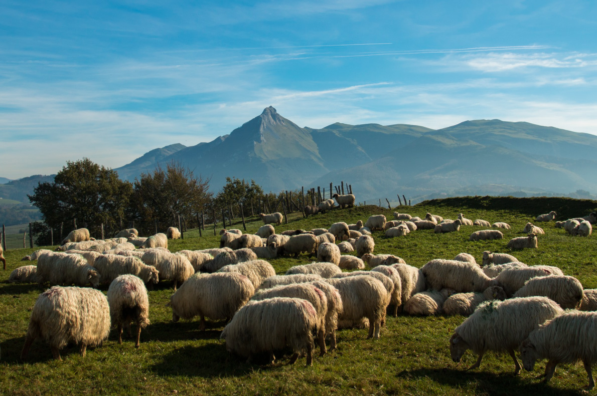 Best sustainable destinations for hiking - Goeirri the sheap cheese trail Copyright European Best Destinations