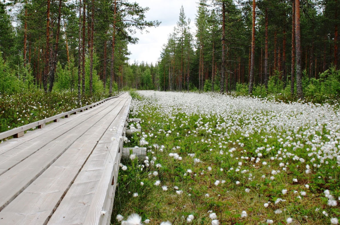 Best sustainable destinations for hiking - Wild Taiga - copyright Matti-KOlho