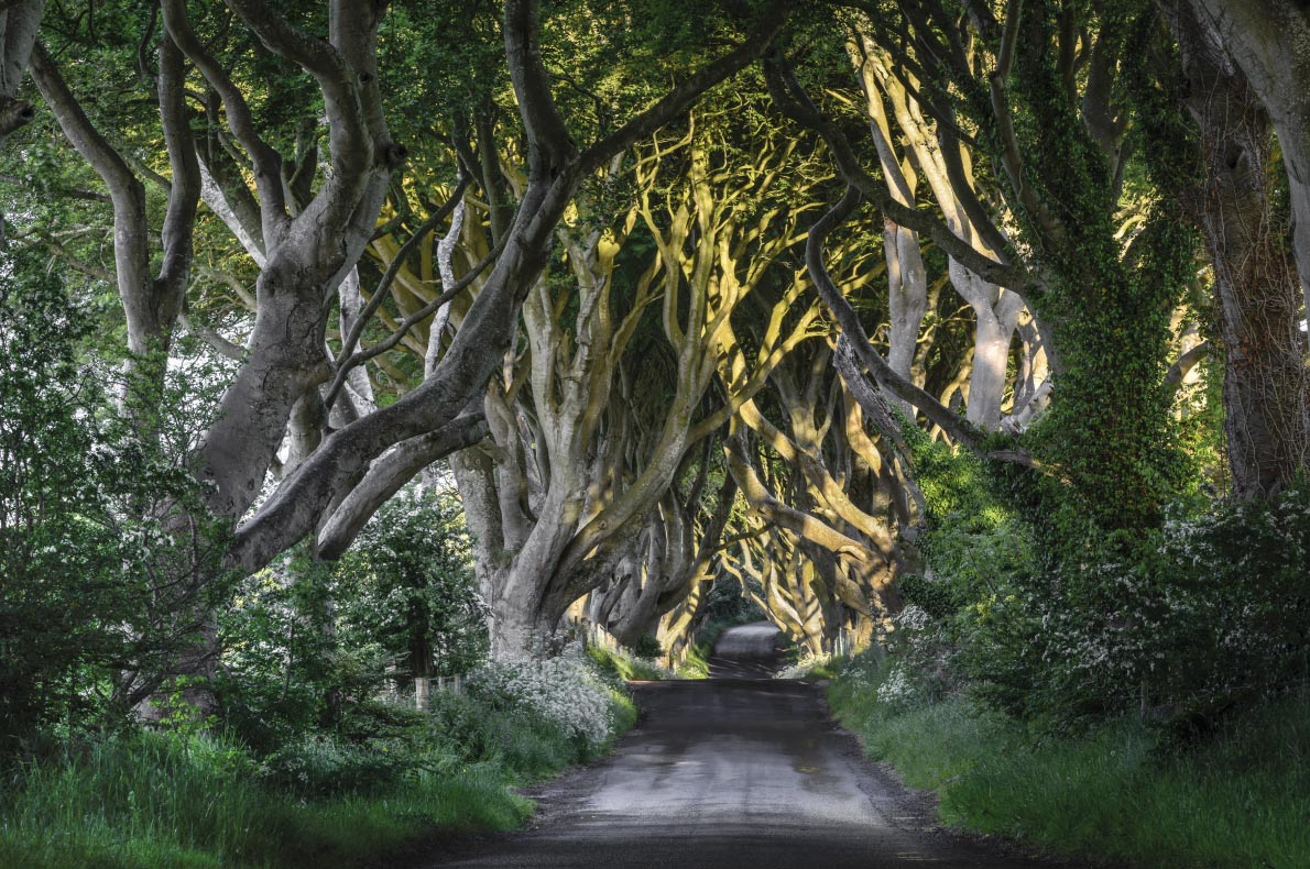 Dark hedges in Ireland - Best Fairytales destinations in Europe - Copyright Jacek_Kadaj - European Best Destinations