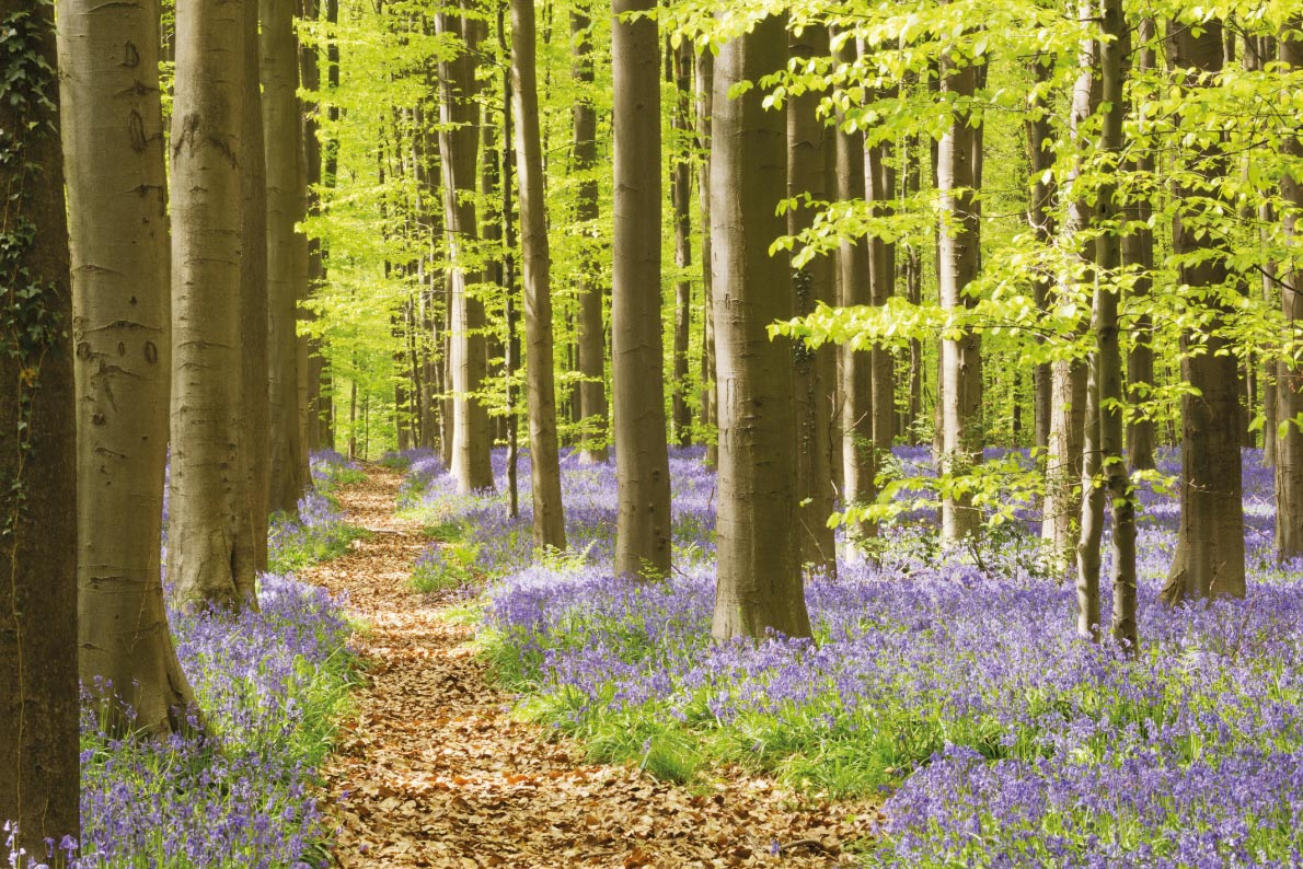Most beaufitul landscapes in Europe - Hallerbos Forest -Copyright Sara Winter - European Best Destinations