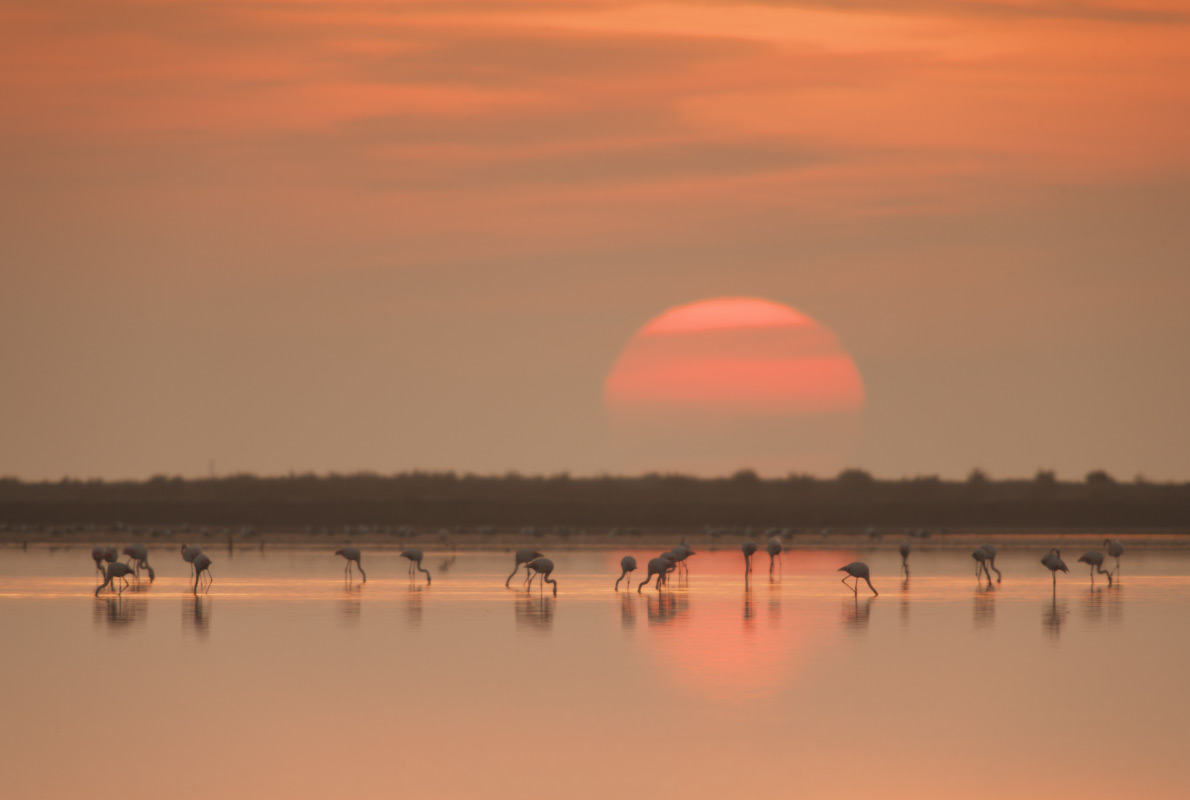 Camargues - Best Bird Watching destinations in Europe - Copyright La Nau de Fotografia  - European Best Destinations