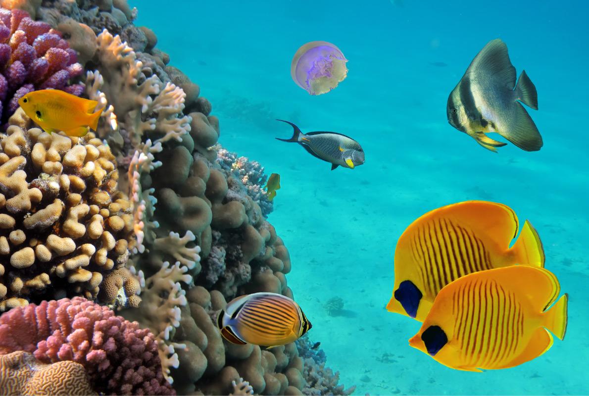 Guadeloupe - Best diving destinations in Europe - Copyright Vlad61 - European Best Destinations