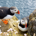 best-bird-watching-destinations