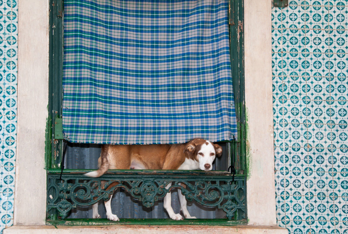 Lisbon - Best dog friendly destinations in Europe - Copyright Vilant - European Best Destinations