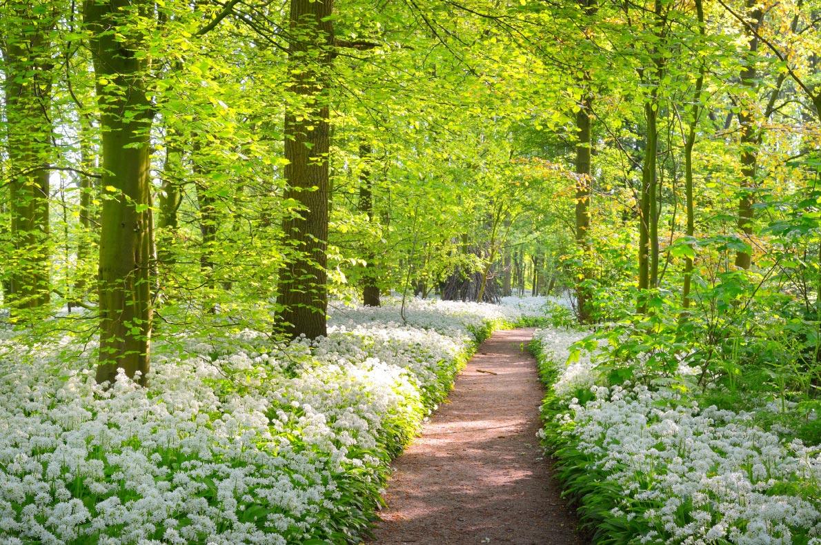 Best hidden gems in The Netherlands - Stochemhoeve - Copyright Aleksey Stemmer - European Best Destinations