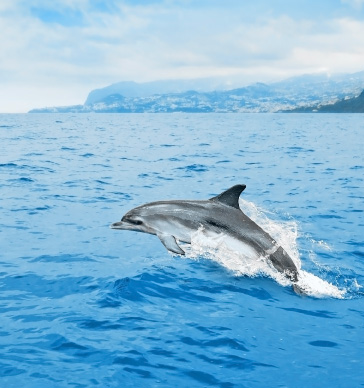 best-destinations-to-watch-dolphins-and-whales-in-europe