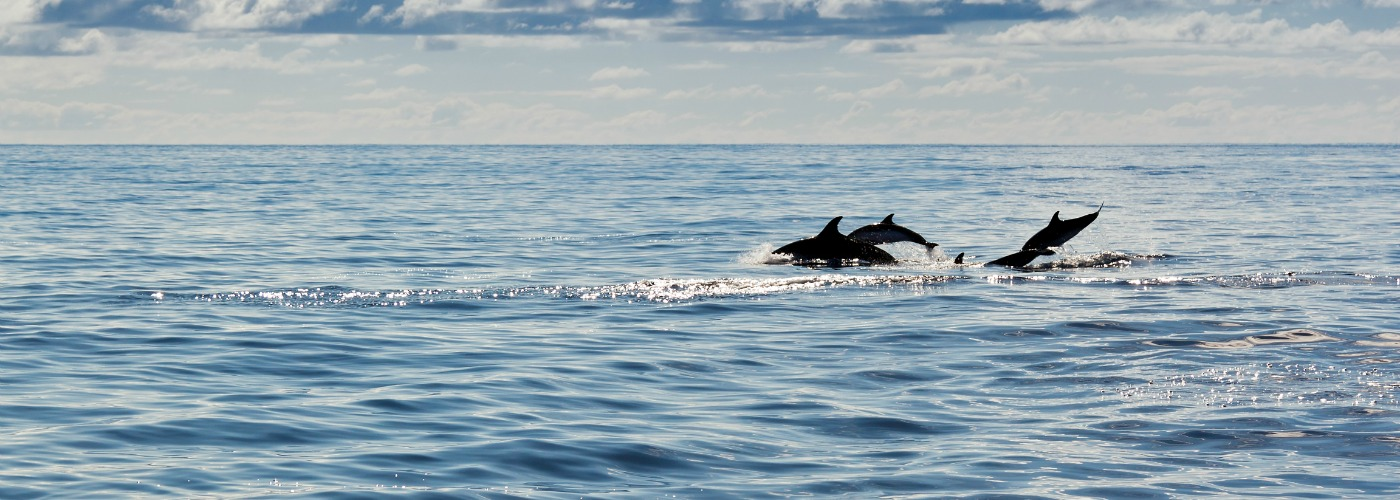 Best dolphins destinations in Europe