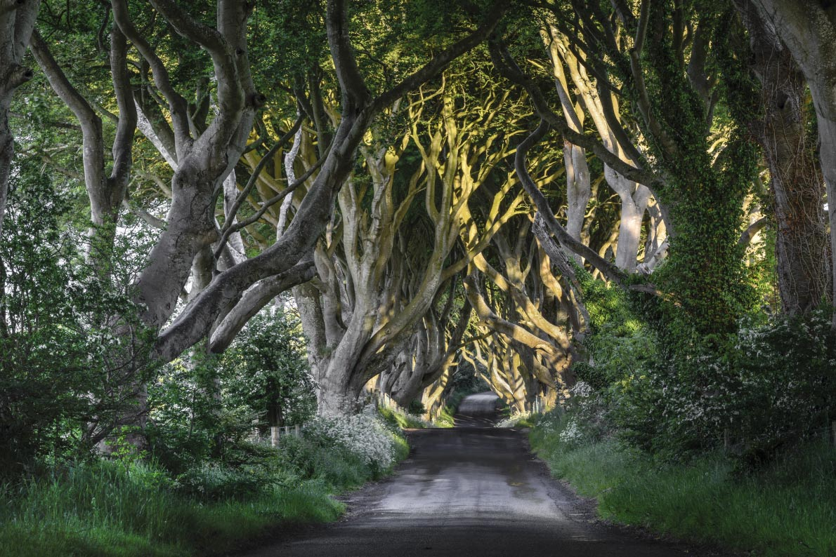 Most beautiful landscapes in Europe -Dark hedges in Ireland -  European Best Destinations Copyright Jacek_Kadaj
