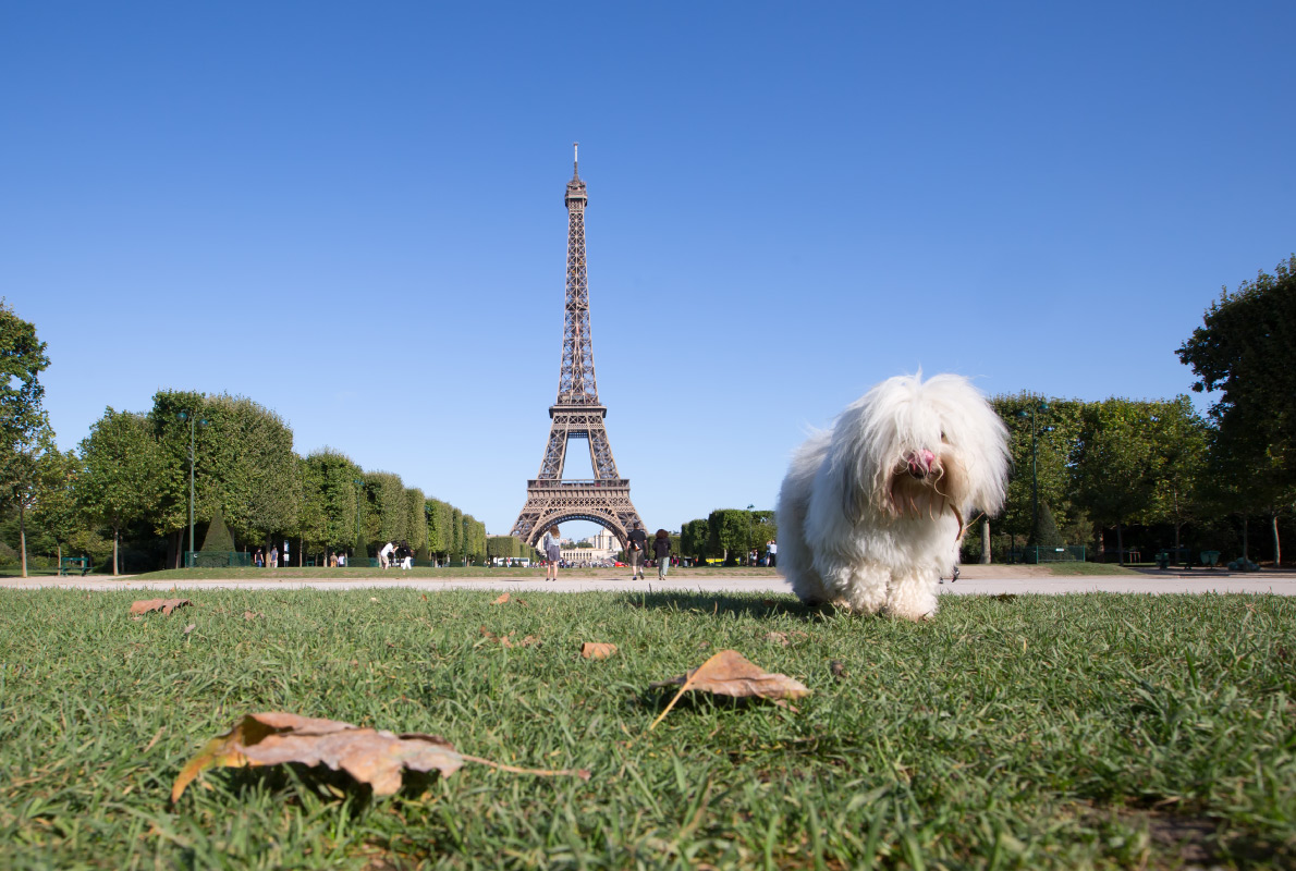 Paris - Best dog friendly destinations in Europe - Copyright yongyot therdthai - European Best Destinations