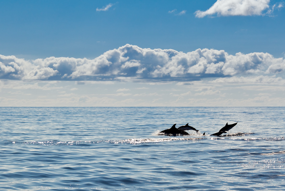 Tarifa - Best dolphins and whales destinations in Europe - Copyright Dennis van de Water - European Best Destinations