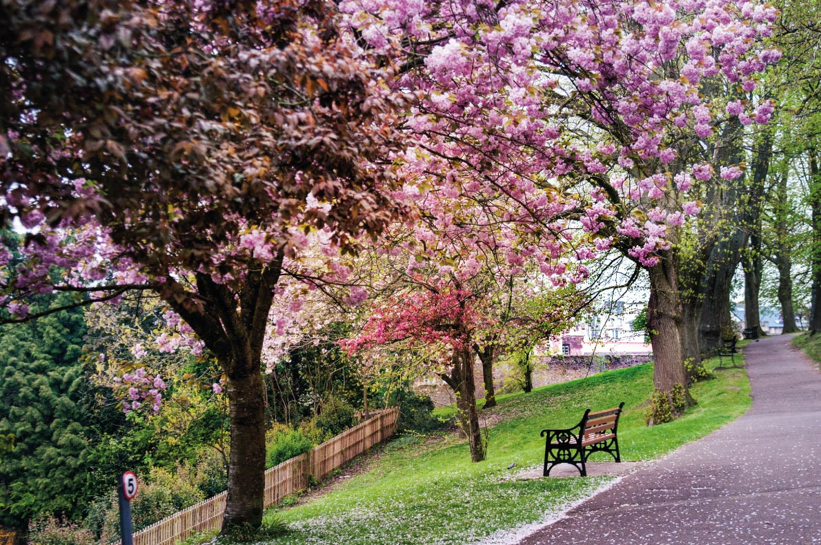 Cherry blossoms in Europe - Bristol Park in spring flowers Copyright Anna Kepa   - European Best Destinations