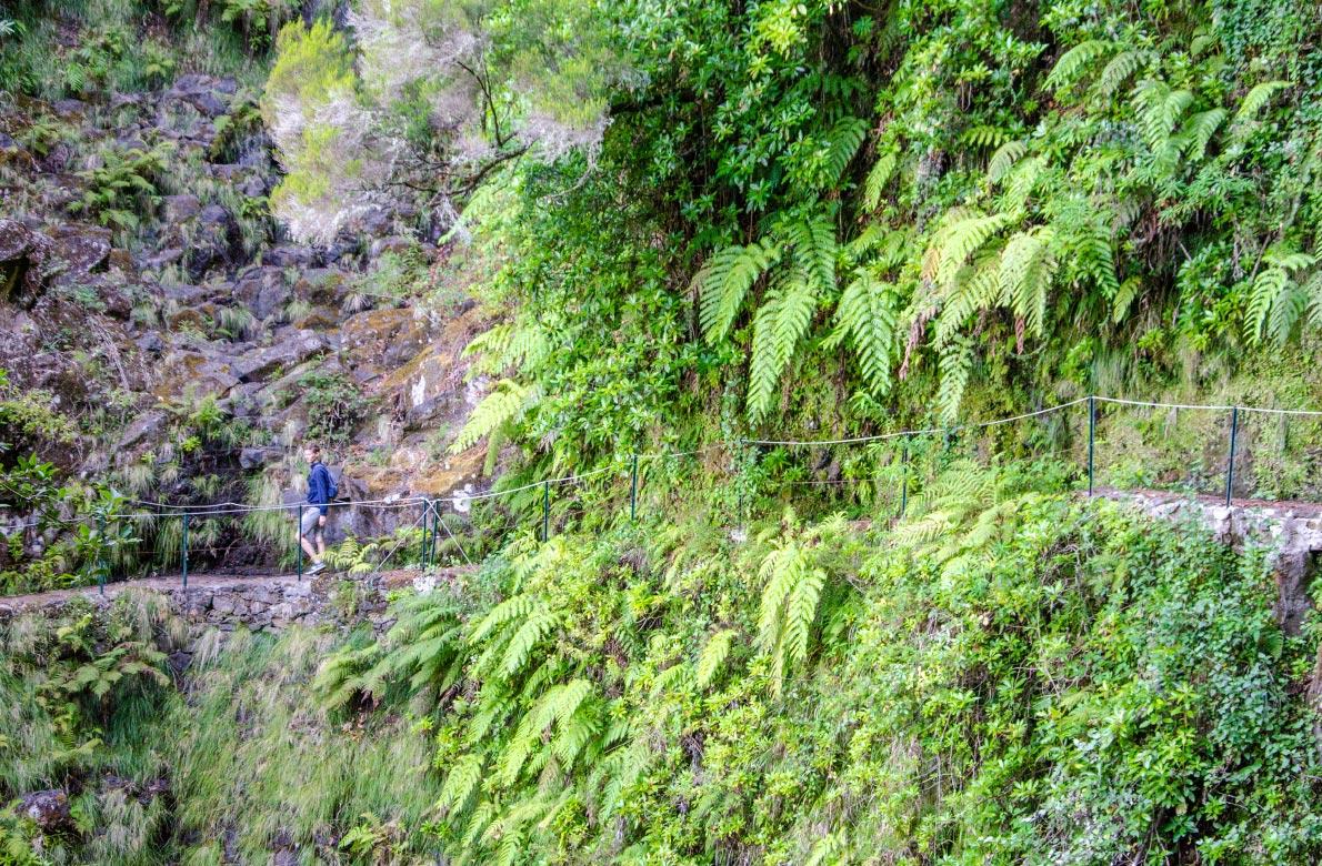 levada-dos-cedros-madeira-hiking