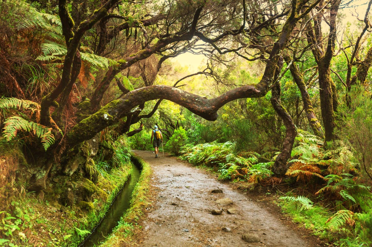 hiking-along-levada-best-things-to-do-for-nature-lovers-in-madeira