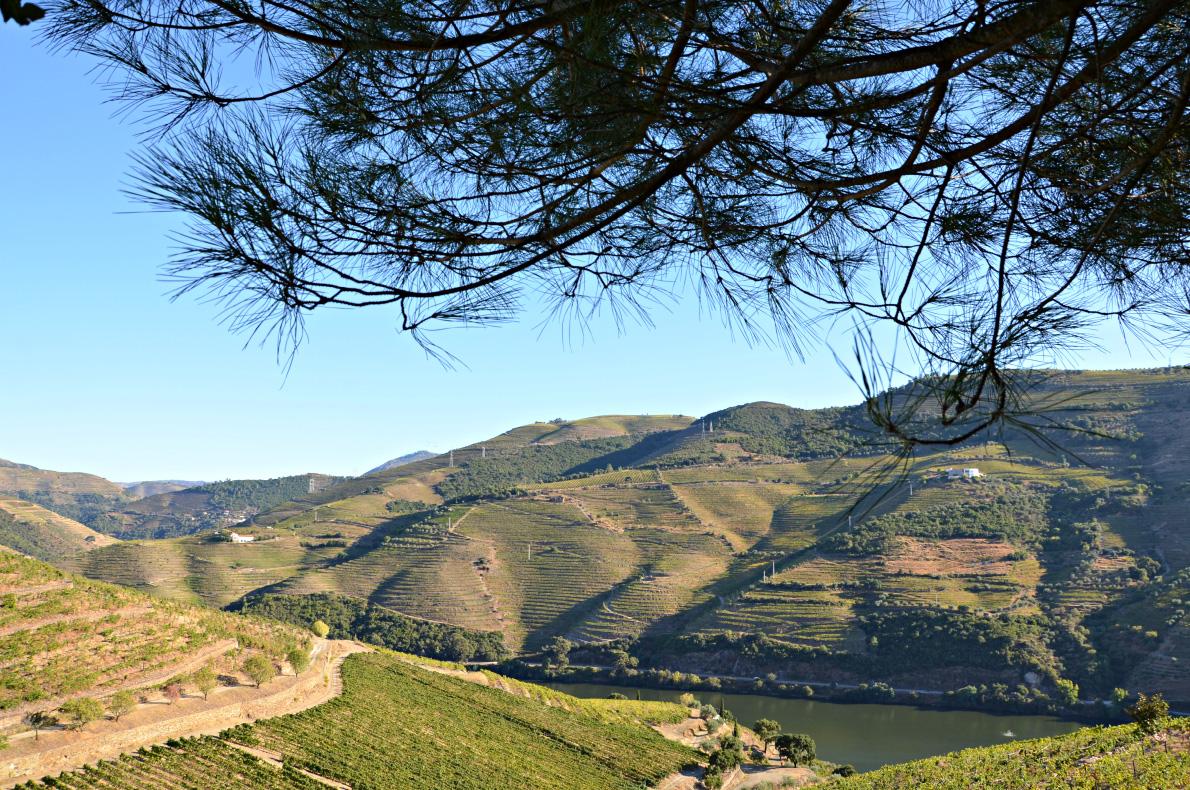 douro-river-cruise-portugal