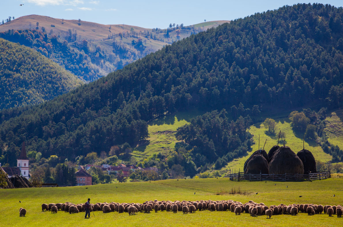 Best sustainable experiences in Europe - The sheep cheese road - Copyright Marginimea Sibiului  - European Best Destinations